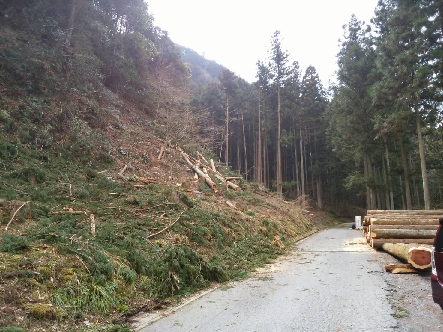「森の小道」リニューアルプロジェクト